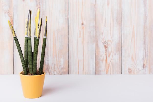 Nahaufnahme des houseplant im gelben topf auf weißem schreibtisch gegen hölzerne wand Kostenlose Fotos