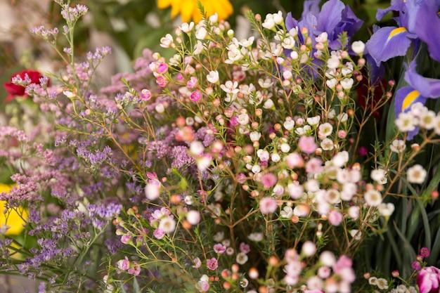 Nahaufnahme des kleinen frühlingsblumenblumenstraußes Kostenlose Fotos