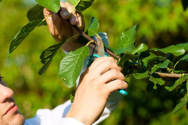 Nahaufnahme des mannausschnitt-obstbaumasts mit trimmer Premium Fotos