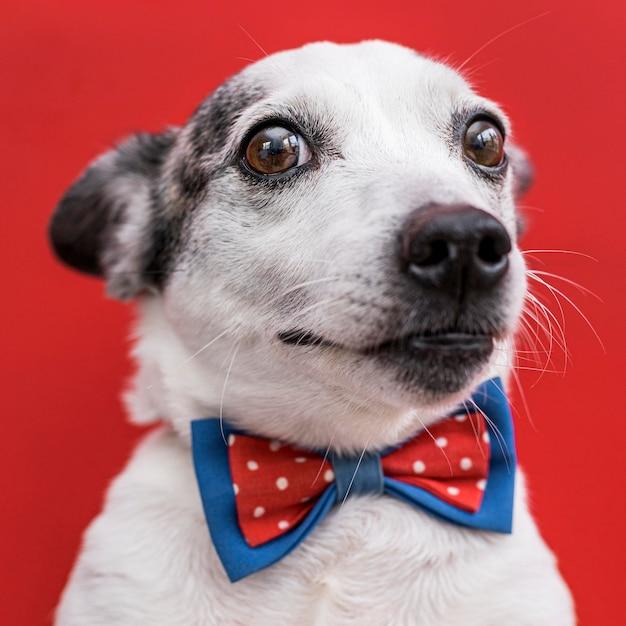 Nahaufnahme des schönen hundes mit fliege Kostenlose Fotos