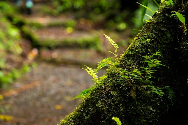 Nahaufnahme des üppigen mooses wachsend auf baumstamm im regenwald Kostenlose Fotos