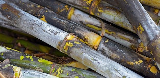 Nahaufnahme des zuckerrohrsatzes Premium Fotos