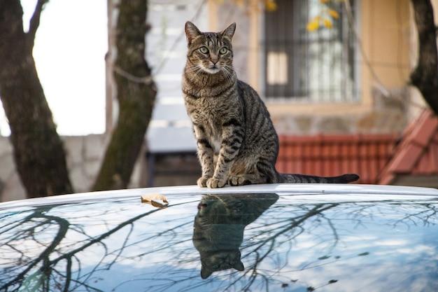 Nahaufnahme einer braunen gestreiften katze, die auf einem auto sitzt, das im herbst gefangen genommen wird Kostenlose Fotos