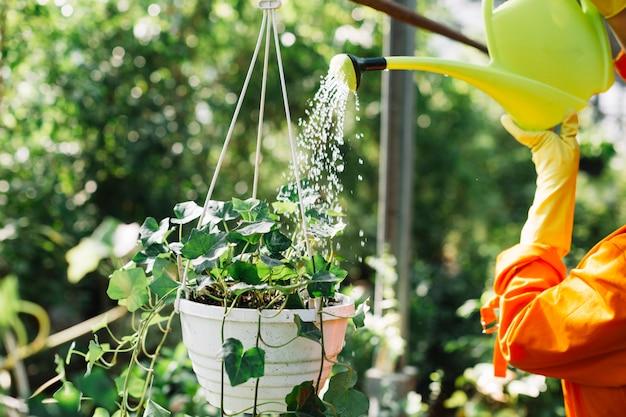 Nahaufnahme einer gärtnerhand, die wasser auf hängender topfpflanze gießt Kostenlose Fotos