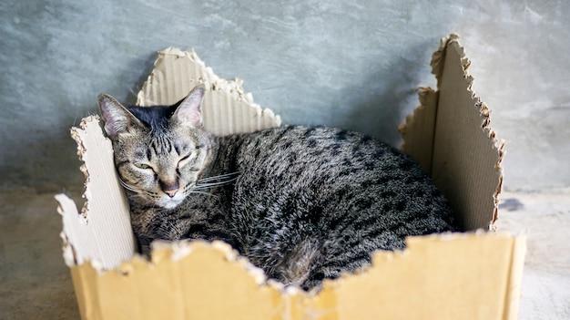 Nahaufnahme einer grauen gestreiften katze, die in einem kasten liegt. Premium Fotos
