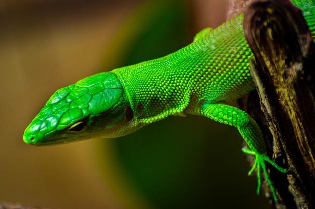 Nahaufnahme einer grünen anole auf einem baum unter dem sonnenlicht Kostenlose Fotos