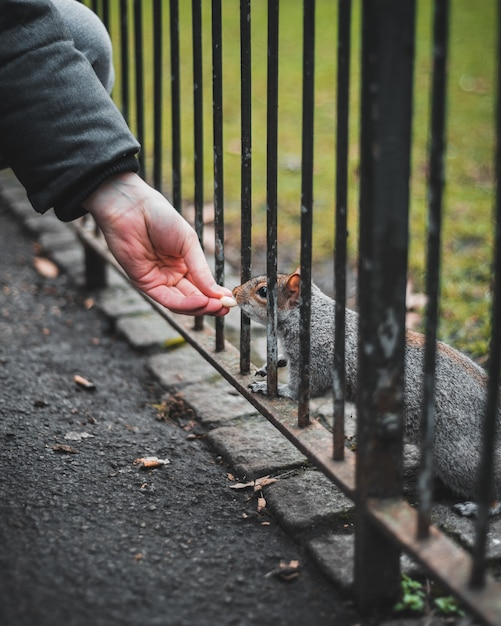 Nahaufnahme einer hand einer person, die ein eichhörnchen füttert Kostenlose Fotos