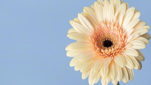 Nahaufnahme einer hübschen blühenden blume Kostenlose Fotos