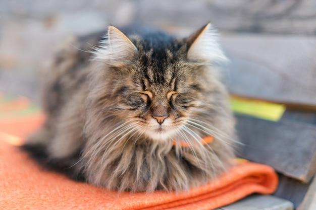 Nahaufnahme einer katze, die auf bank mit unschärfe sitzt. ruhige katze, die im sommer draußen sitzt und schläft. Premium Fotos