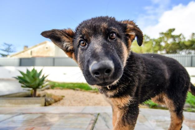 Nahaufnahme eines braunen hundes in einem garten unter dem sonnenlicht mit einem verschwommenen hintergrund Kostenlose Fotos
