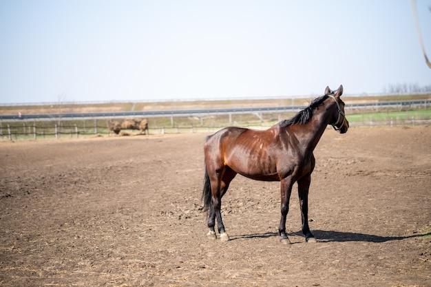 Nahaufnahme eines braunen pferdes, das in einem corral an einem sonnigen tag steht Kostenlose Fotos