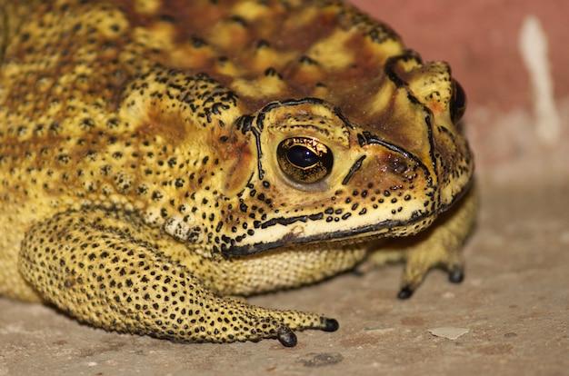 Nahaufnahme eines gelben und braunen frosches auf dem boden Kostenlose Fotos