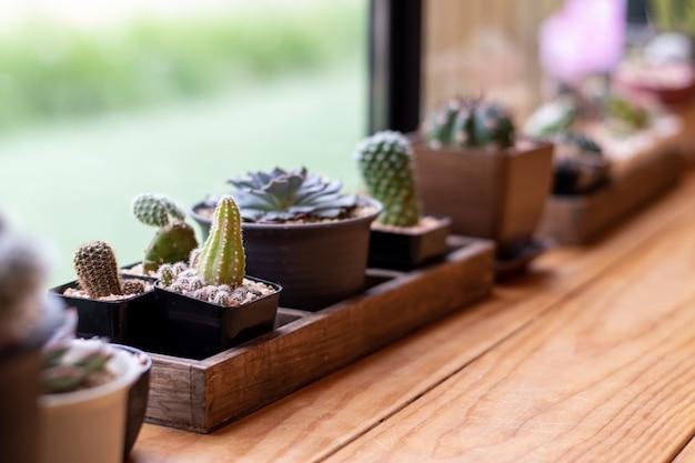 Nahaufnahme eines kaktus in einem kleinen topf nahe dem fenster für eine vintage-wohnkultur Premium Fotos