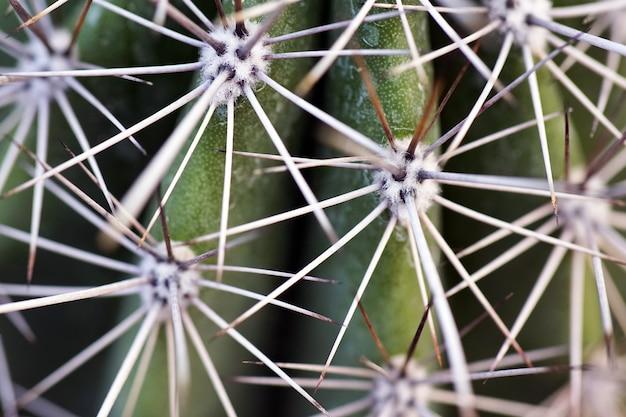 Nahaufnahme eines kaktus mit nadeln während des tages Kostenlose Fotos