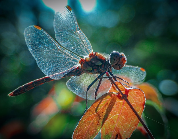Nahaufnahme eines netzflügelinsekts auf dem blatt Kostenlose Fotos
