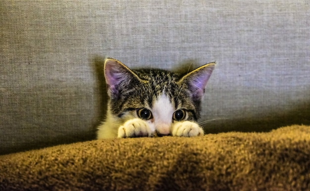 Nahaufnahme eines niedlichen kätzchens hinter einer decke Kostenlose Fotos