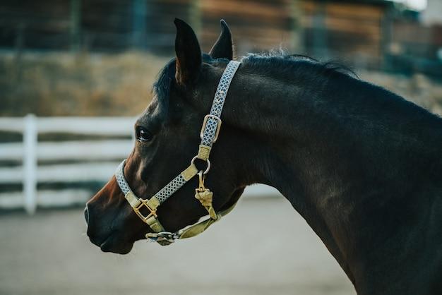 Nahaufnahme eines pferdes in der ranch, die geschirr mit einem unscharfen hintergrund trägt Kostenlose Fotos