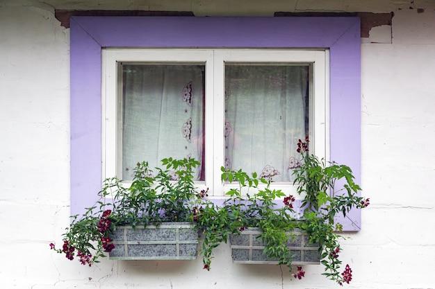 Nahaufnahme eines reizend fensters eines weißen alten hauses mit violetten hölzernen fensterläden Premium Fotos
