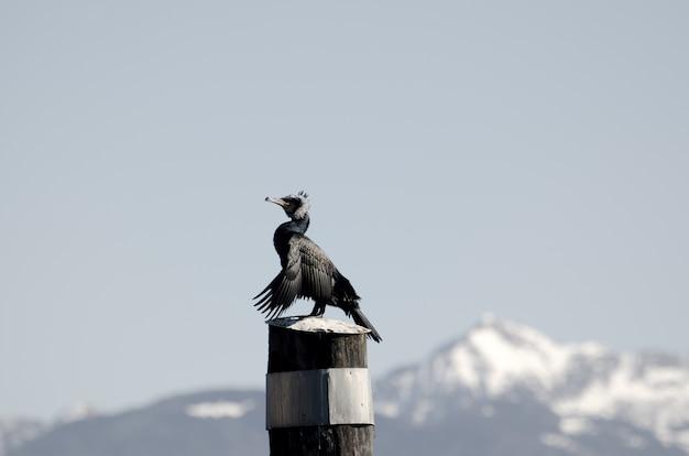 Nahaufnahme eines vogels, der auf holzpfosten gegen einen klaren himmel hockt Kostenlose Fotos