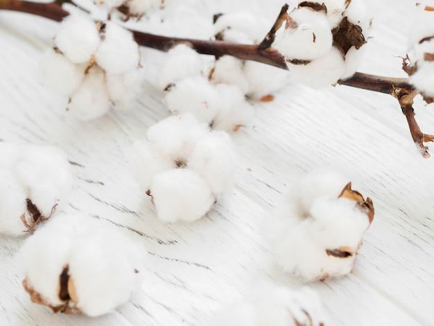 Nahaufnahme mit baumwollblumen Kostenlose Fotos