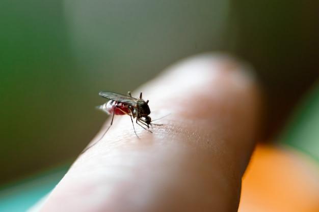 Nahaufnahme ofnasty insektenmoskito sittingher hand und trinkt das blut der durchbohrten haut Premium Fotos