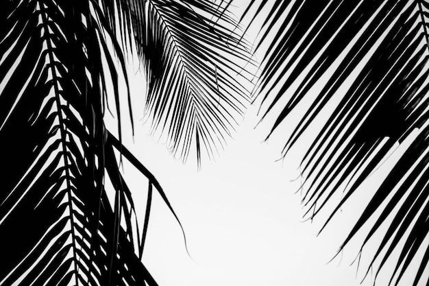Nahaufnahme palmblätter. einfarbig Premium Fotos