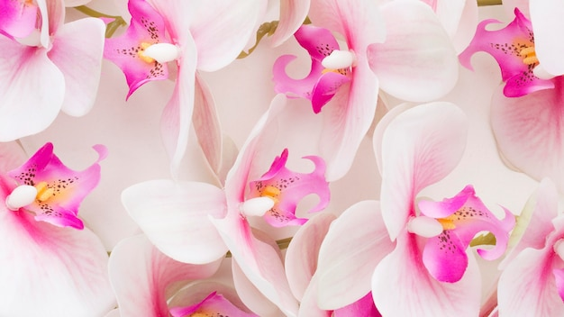 Nahaufnahme rosa orchideen Premium Fotos