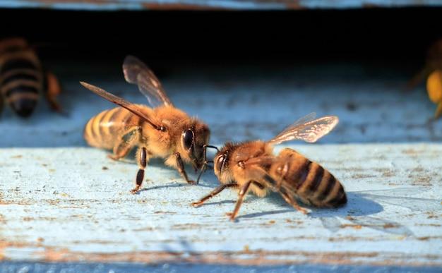 Nahaufnahme schuss von bienen auf einer holzoberfläche während des tages Kostenlose Fotos