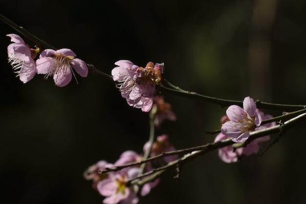 Nahaufnahme schuss von lila blumen auf dem ast Kostenlose Fotos