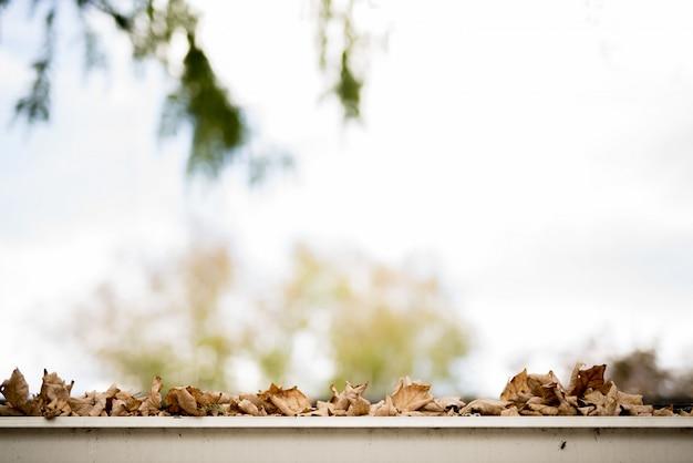 Nahaufnahme schuss von trockenen braunen blättern, die auf eine weiße oberfläche mit einem unscharfen hintergrund fielen Kostenlose Fotos