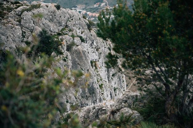 Nahaufnahme von bäumen mit felsigen bergen Kostenlose Fotos