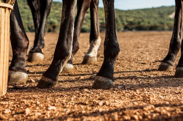 Nahaufnahme von beinen eines gestüts von pferden Kostenlose Fotos