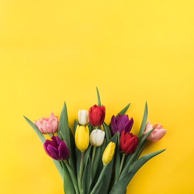 Nahaufnahme von bunten tulpen gegen gelben hintergrund Kostenlose Fotos