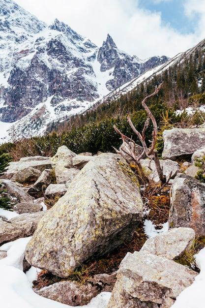 Nahaufnahme von felsen nahe dem berg mit bäumen Kostenlose Fotos