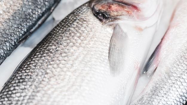 Nahaufnahme von frischen fischen im markt Kostenlose Fotos