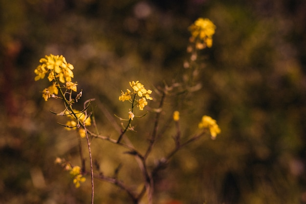 Nahaufnahme von gelben blättern während des sonnenlichts Kostenlose Fotos