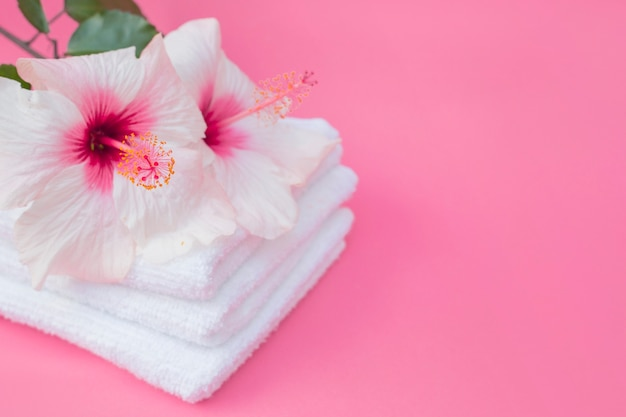 Nahaufnahme von hibiscusblumen und von weißem tuch auf rosa hintergrund Kostenlose Fotos