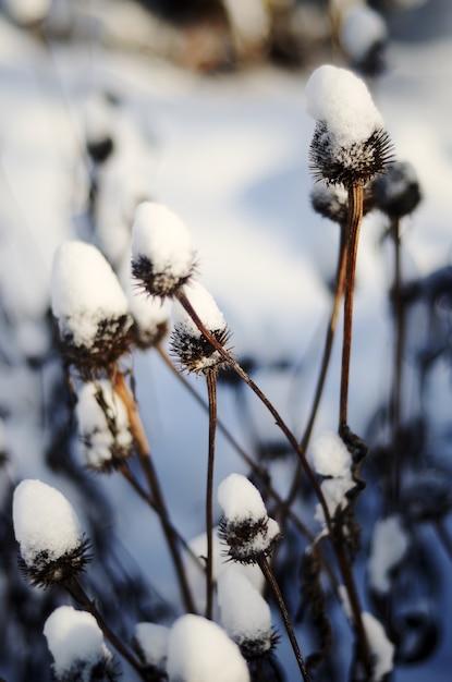 Nahaufnahme von langen trockenen pflanzen mit dornen bedeckt mit dem schnee Kostenlose Fotos