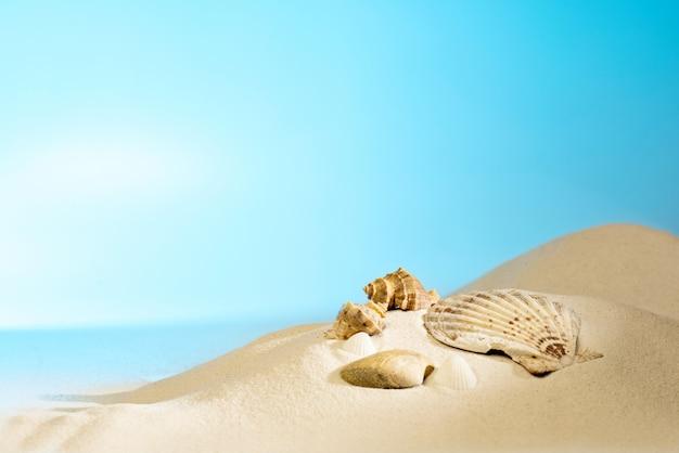 Nahaufnahme von muscheln am sandstrand Premium Fotos