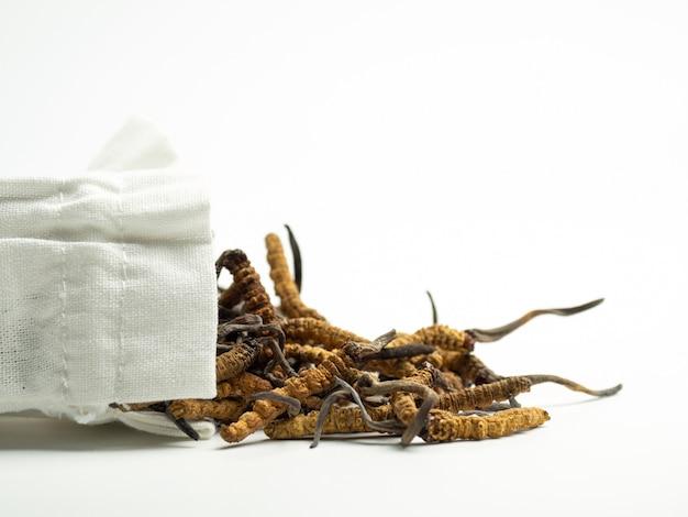 Nahaufnahme von ophiocordyceps-sinensis oder -pilz-cordyceps in der weißen stofftasche auf lokalisiertem hintergrund. Premium Fotos