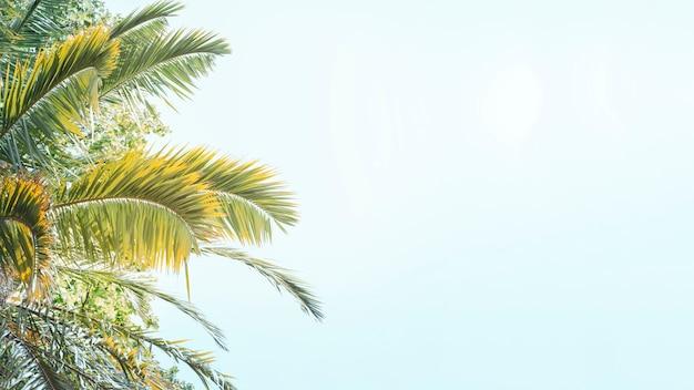 Nahaufnahme von palmen gegen blauen himmel Kostenlose Fotos