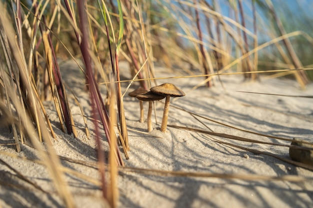 Nahaufnahme von pilzen im sand, umgeben von gras unter sonnenlicht Kostenlose Fotos