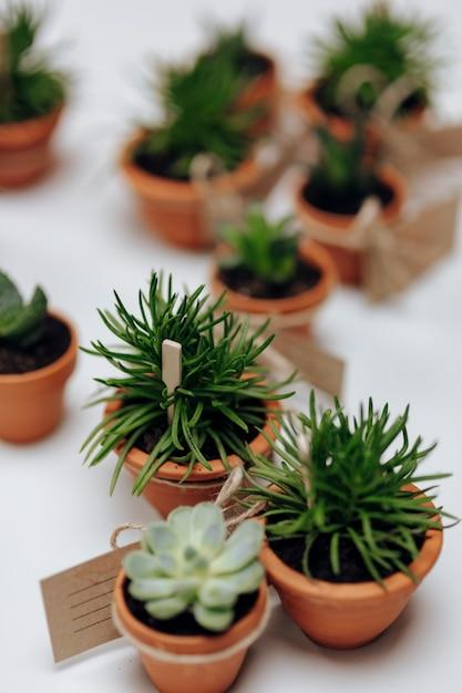 Nahaufnahme von succulents in den töpfen Kostenlose Fotos