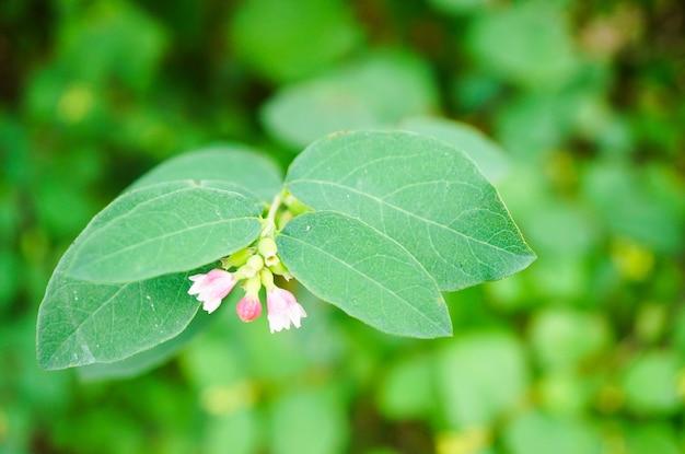 Nahaufnahmeansicht der winzigen glockenblumen mit grünen blättern auf einem unscharfen hintergrund Kostenlose Fotos