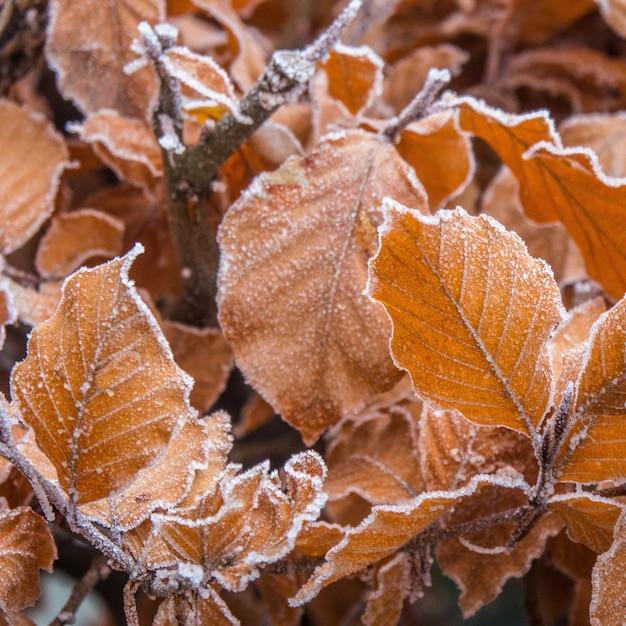 Nahaufnahmeaufnahme der schönen herbstblätter bedeckt mit frost mit einem verschwommenen hintergrund Kostenlose Fotos
