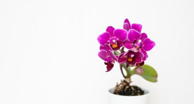 Nahaufnahmeaufnahme der schönen lila orchideenblumen lokalisiert auf einem weißen hintergrund Kostenlose Fotos