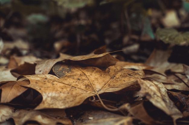 Nahaufnahmeaufnahme des alten trockenen herbstlaubs, das auf dem boden in einem park liegt Kostenlose Fotos