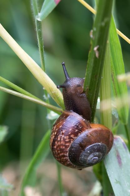 Nahaufnahmeaufnahme einer braunen schnecke, die versucht, über ein grünes gras zu klettern Kostenlose Fotos