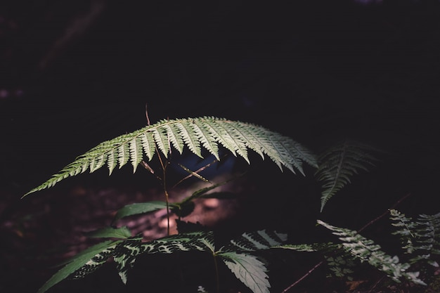 Nahaufnahmeaufnahme einer farnpflanze in einem dschungel unter dem mondlicht Kostenlose Fotos