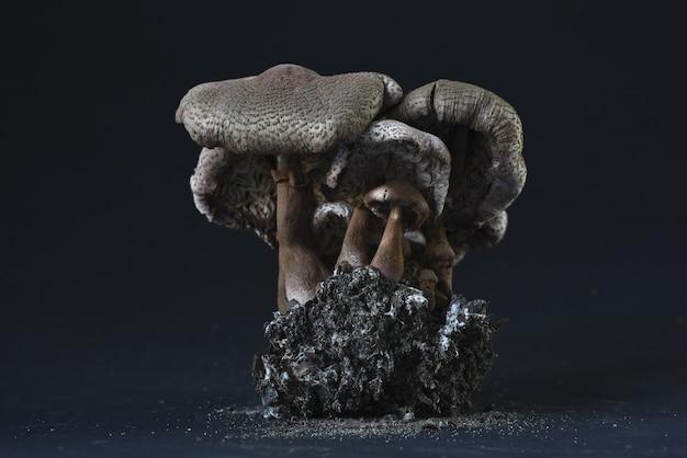 Nahaufnahmeaufnahme einer fossilen statue der pilze Kostenlose Fotos